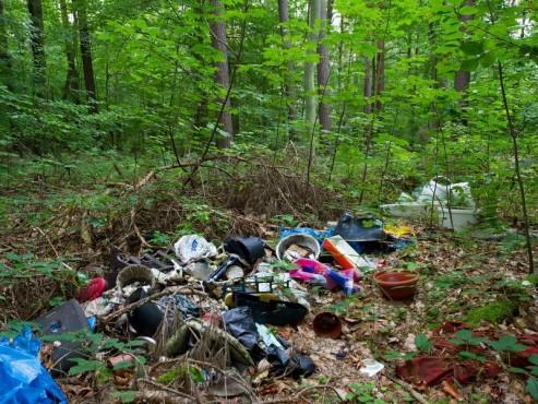 Müll im Schöneicher Wald