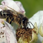 FFH-Gebiete - auch gut für Bienen. Bild: luise  / pixelio.de