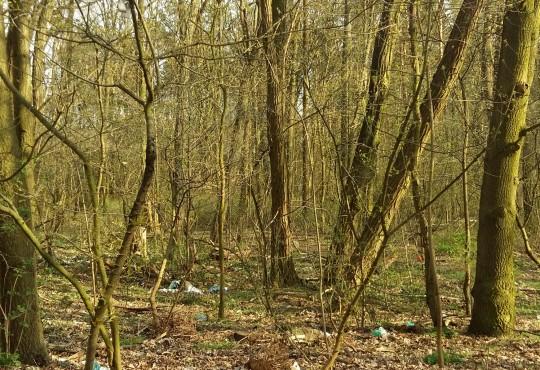 Der verdreckte Wald vor der Aktion (Foto: Anna Kruse)